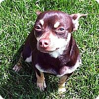 Adopt A Pet :: Diggs - Toronto, ON