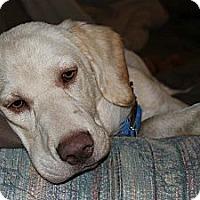 Adopt A Pet :: *Sonny - PENDING - Westport, CT