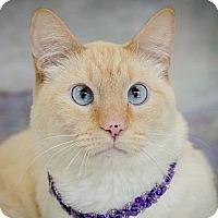 Adopt A Pet :: Swag - Sacramento, CA