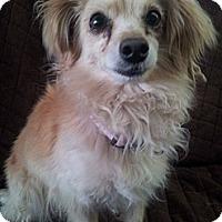 Adopt A Pet :: Tulip - Scottsdale, AZ