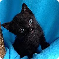 Adopt A Pet :: Gypsy - Union, KY