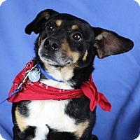 Adopt A Pet :: Hector - Minneapolis, MN