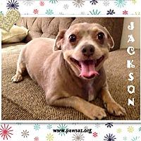 Adopt A Pet :: Jackson (Jack) - Higley, AZ