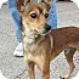 Fox Terrier (Smooth) Mix Dog for adoption in Houston, Texas - Bernard