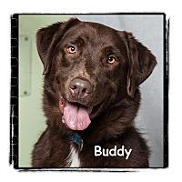 Adopt A Pet :: Buddy - Warren, PA