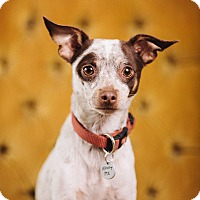Adopt A Pet :: Forrest - Portland, OR