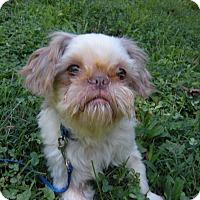 Adopt A Pet :: Gilligan - LEXINGTON, KY