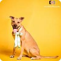 Adopt A Pet :: Clover - Blacklick, OH