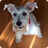 Adopt A Pet :: Elsa - Redondo Beach, CA