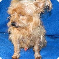 Adopt A Pet :: Otis - Umatilla, FL