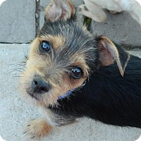 Adopt A Pet :: Wrigley - Henderson, NV