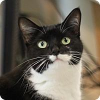 Adopt A Pet :: Catarina - Naperville, IL