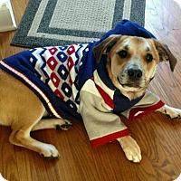 Adopt A Pet :: Claude - Lawrenceville, GA