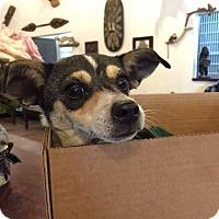 Adopt A Pet :: Darcy - Homestead, FL