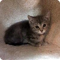 Adopt A Pet :: Matey - Janesville, WI