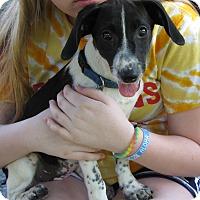 Adopt A Pet :: Micka - Aurora, IL