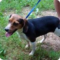 Adopt A Pet :: Maybeline - Dumfries, VA