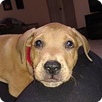 Adopt A Pet :: Lori - Tampa, FL