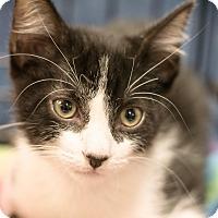 Adopt A Pet :: Astro - Gainesville, FL