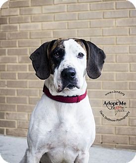 Hound (Unknown Type) Mix Dog for adoption in Mooresville, North Carolina - Brogan