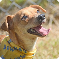 Adopt A Pet :: Harriet - San Leon, TX
