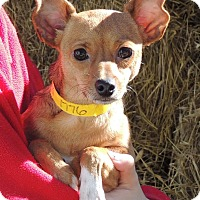 Adopt A Pet :: Sopapilla - Joplin, MO