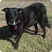 Adopt A Pet :: Maxie - Olive Branch, MS