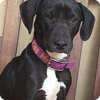 Adopt A Pet :: Ginna  URGENT FOSTER HOME NEED - cupertino, CA