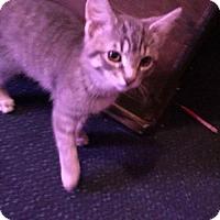 Adopt A Pet :: Keanu - Lewistown, PA