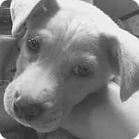 Adopt A Pet :: Jackson~ meet me! - Glastonbury, CT
