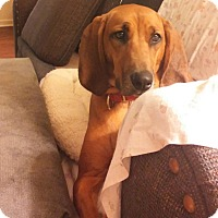 Adopt A Pet :: Reah - URGENT!!! - Clarksville, TN