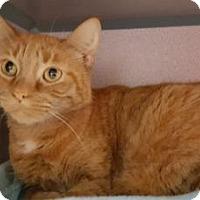 Adopt A Pet :: Tia - Knoxville, IA