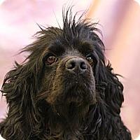 Adopt A Pet :: Hades - Roosevelt, UT