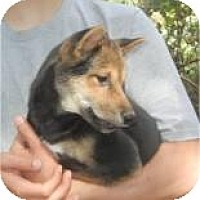 Adopt A Pet :: Simon ADOPTED!! - Antioch, IL