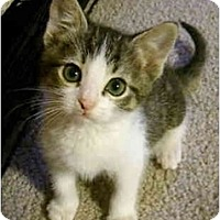 Adopt A Pet :: Possum - Davis, CA