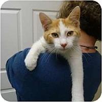 Adopt A Pet :: Danny - Chicago, IL