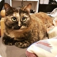 Adopt A Pet :: Cookie - Vancouver, BC