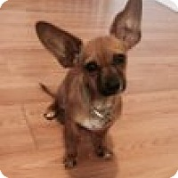 Adopt A Pet :: BAM BAM See me at Petsmart in - Atascadero, CA