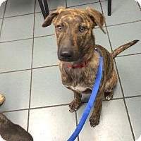 Adopt A Pet :: Mallory - Bellbrook, OH