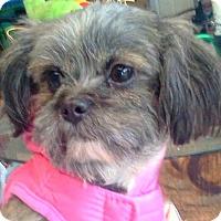 Adopt A Pet :: Molly-NY - Mays Landing, NJ