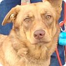 Adopt A Pet :: EMERY (video)