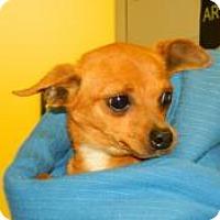 Adopt A Pet :: Tina - Orange Park, FL