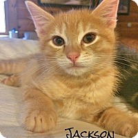 Adopt A Pet :: Jackson - McDonough, GA