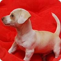 Adopt A Pet :: Ulysses - West Los Angeles, CA
