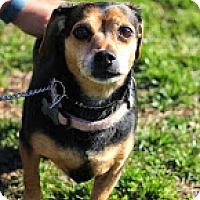 Adopt A Pet :: Alana - Tinton Falls, NJ