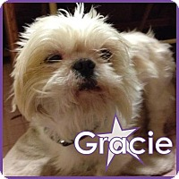 Adopt A Pet :: Gracie III - Excelsior, MN