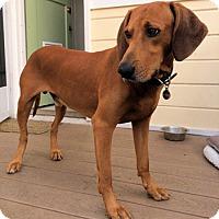 Adopt A Pet :: Mi Amigo - Sacramento area, CA