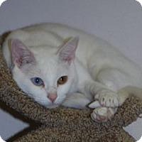 Adopt A Pet :: Pearl - Colorado Springs, CO