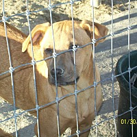 Adopt A Pet :: Sassy - Mexia, TX