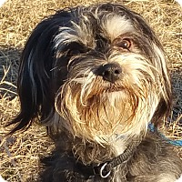 Adopt A Pet :: Bentley - Spring Valley, NY